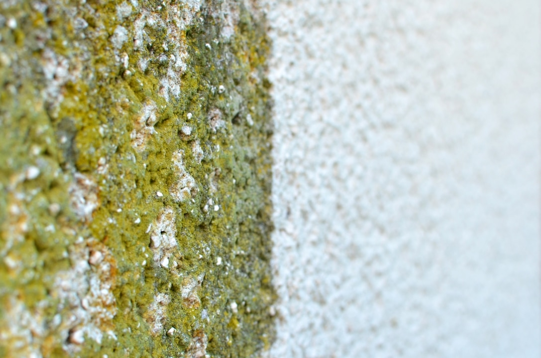Algen an Fassaden